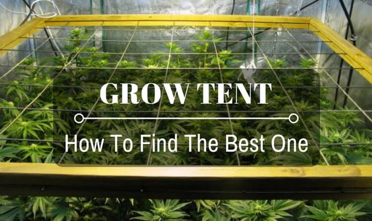 & Best Grow Tent Reviews of 2018: Complete Buying Guide