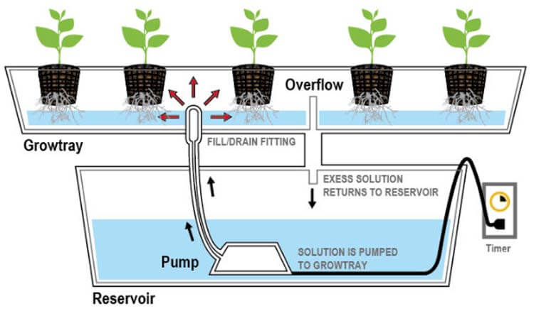 hydroponic growing system