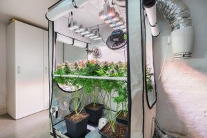 What Is Grow Tent