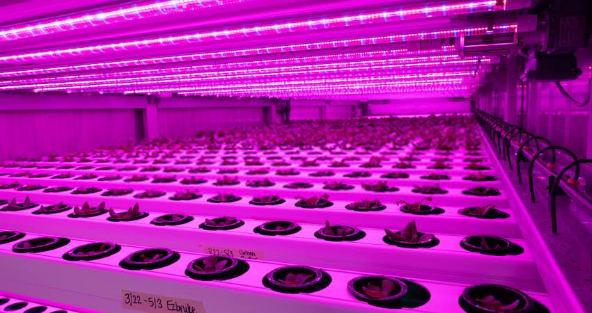 Calculate for LED Wattage Per Square Foot of Grow Space