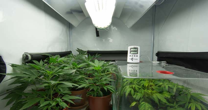 Manage High Temperature in the Grow Room