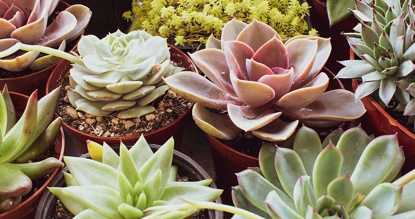 variety-of-succulent-plants