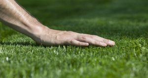 Weed Killers for Bermuda Grass