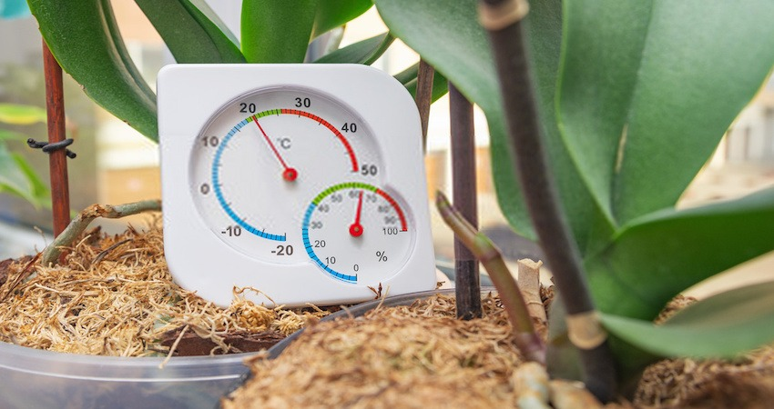 Best Hygrometer for Grow Rooms
