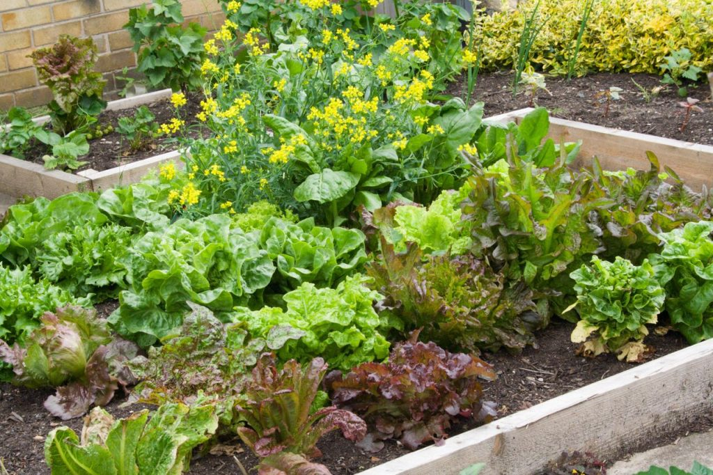 Vegetable Garden Ideas for Your Tiny House