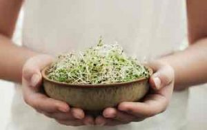 Sprouts Are Not Microgreens