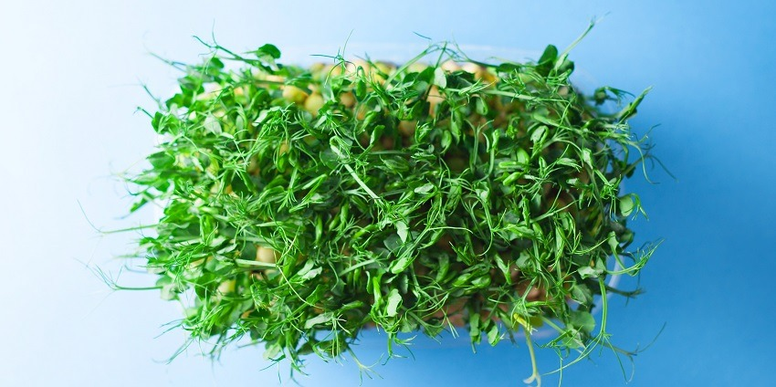 Tips For Growing Microgreens