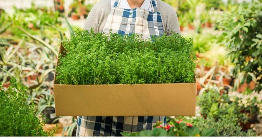How To Store Fresh Herbs Long Term