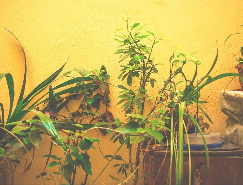 Tips to ensure plant success