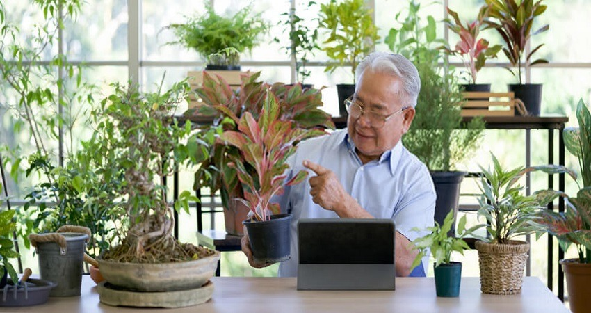 Indoor Gardening Activities For Seniors