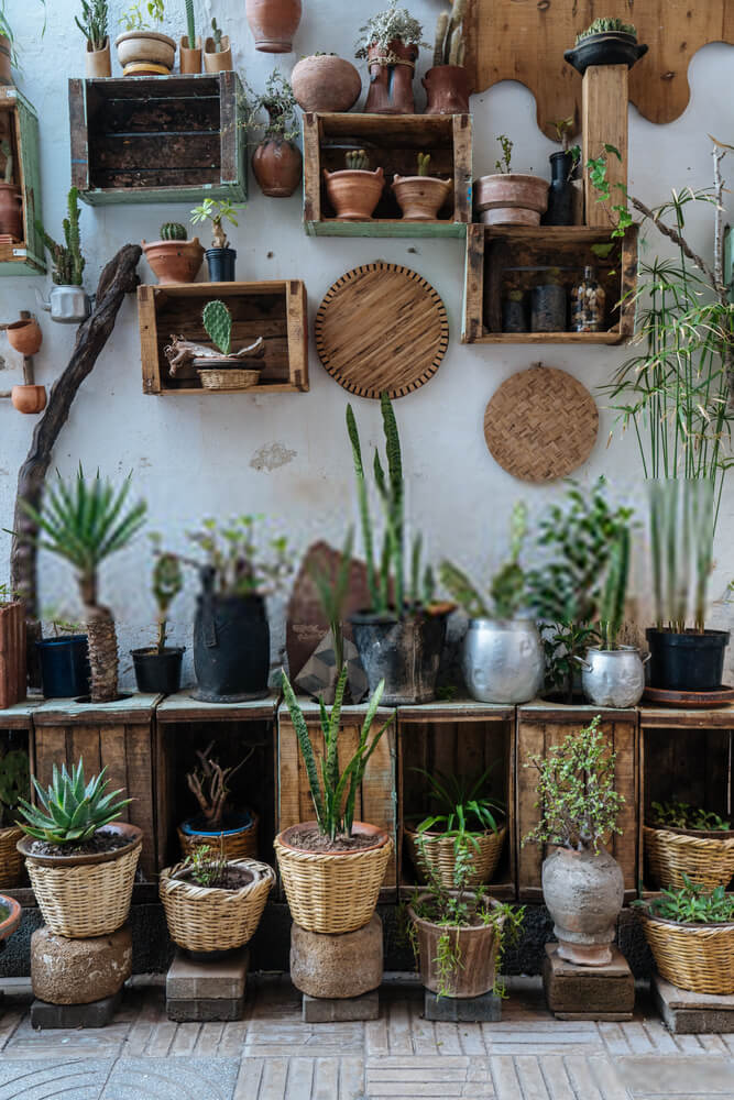 Tips for growing a successful vertical garden