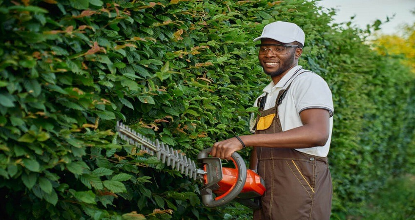 Tools to cut tree branches