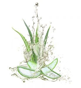 How do I know if I have overwatered my Aloe Vera