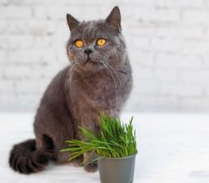 How to keep your pets away from your plants