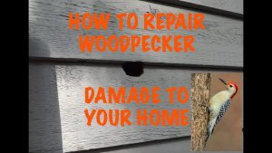 How to repair woodpecker damage