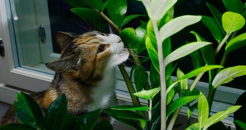 Indoor Plants Poisonous to Cats and Dogs