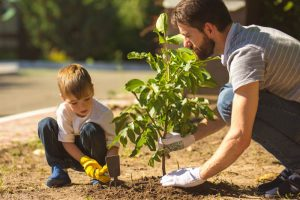 Quick tips for planting trees