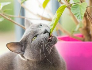 Why do my pets eat my plants