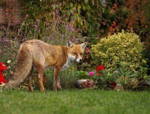 Why should I keep animals out of my garden