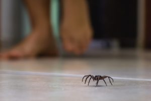 Why you should not kill spiders