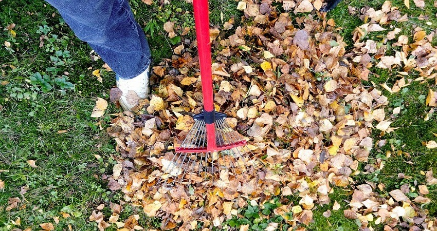 Are Leaves Good for The Garden